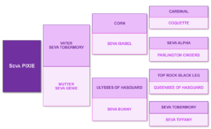 pedigree of the red skewbald colored mare Seva Pixie